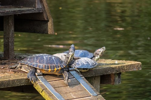 turtle  group  relax