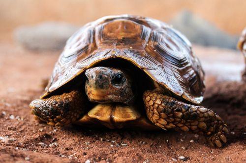 turtle nature slow