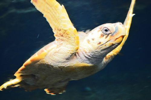 turtle animal nature
