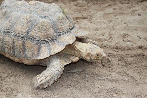 turtle land turtles giant