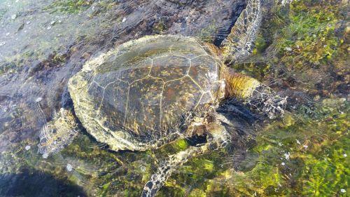 turtle nature water beach