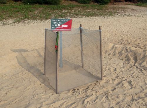 turtle nest marking guarded