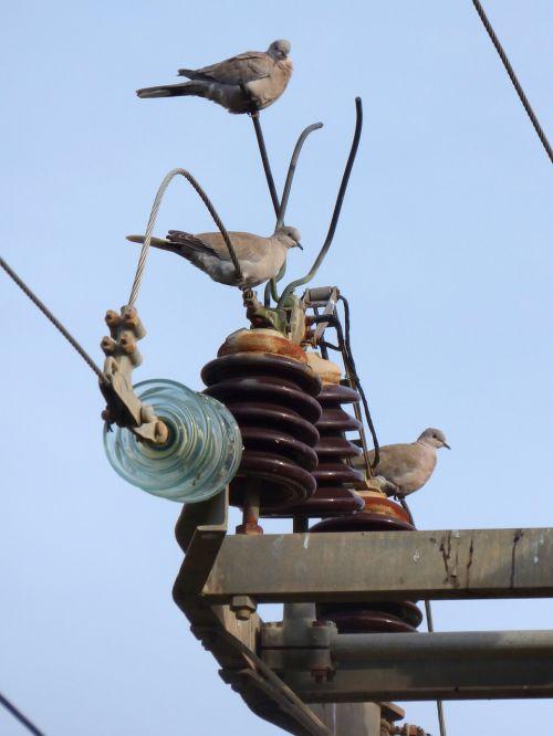 turtledove transformer power line