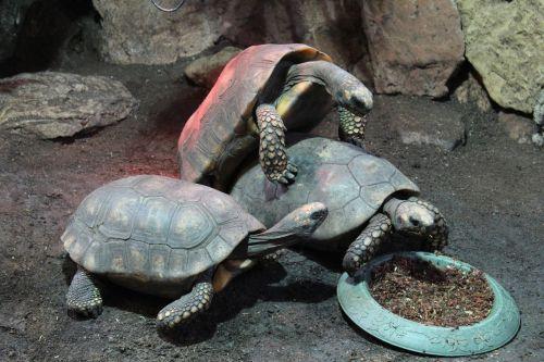 turtles animal reptile