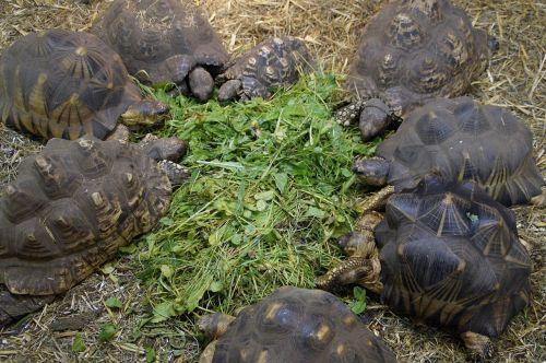 turtles land turtles reptile