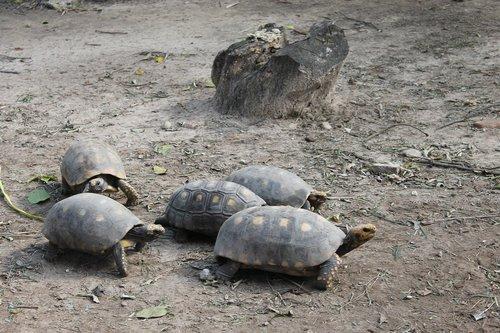 turtles  santa cruz de la sierra  zoo santa cruz