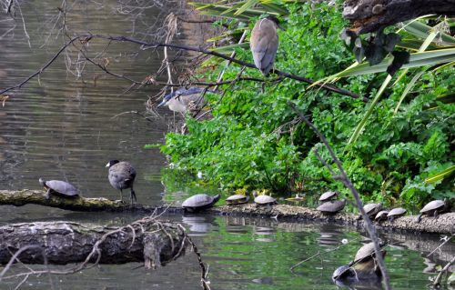 Turtles And Birds