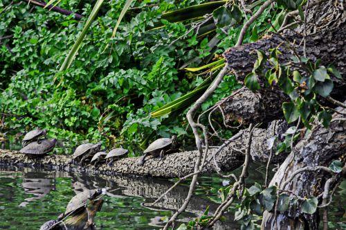 Turtles At The Lagoon