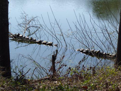 Turtles Gather