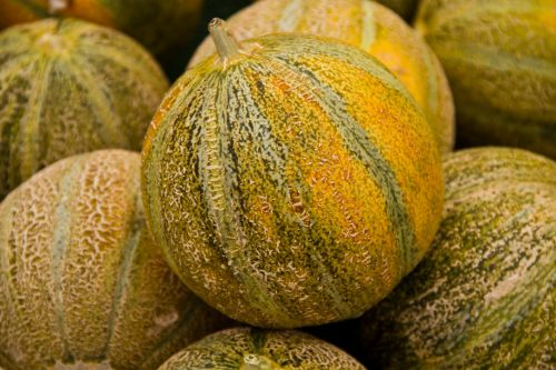 Tuscan Melons