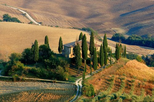 tuscany landscape cypress