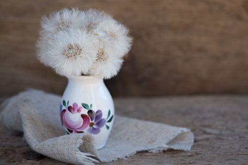 tussilago farfara dandelion seeds