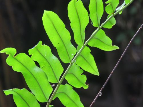 twig leaves plant