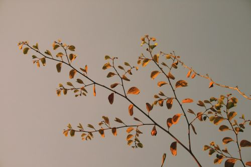 Twig With Leaves
