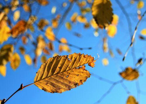 twigs autumn closeup