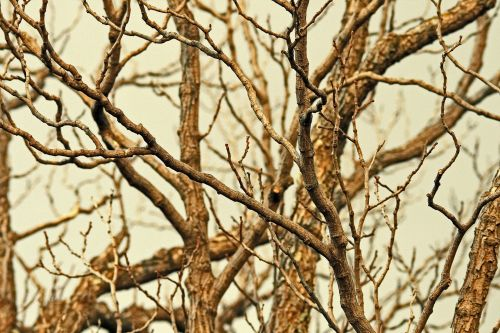 Twigs And Branches In Winter Sky