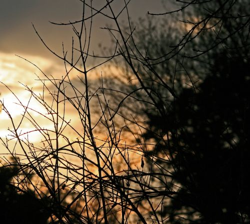 Twigs In The Sunset