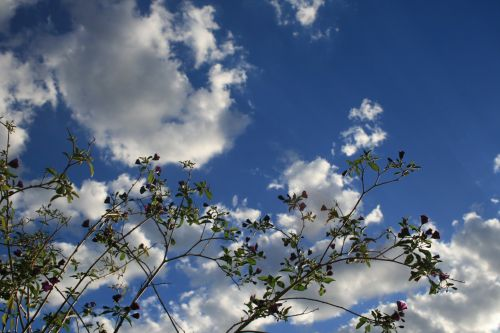 Twigs With Foliage Against The Sky
