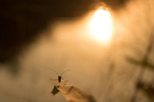 twilight insect macro