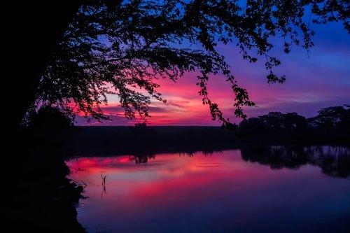 twilight  the tree