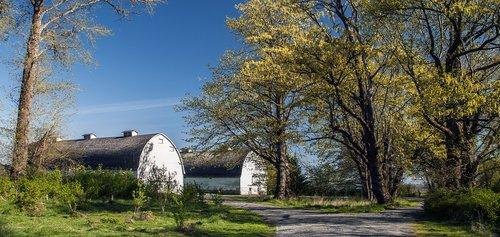 twin milking barns  barns  farm