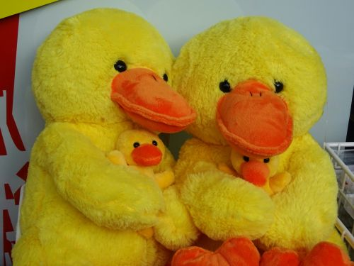 Two Happy Ducks With Ducklings
