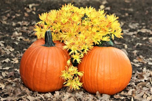 Two Pumpkins And Fall Flowers