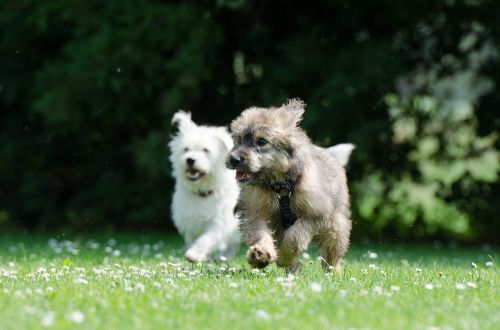 two race dogs raging dogs puppy