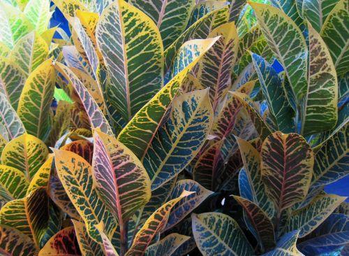Two Tone Leaf Colour