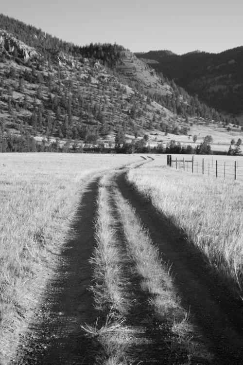 Two Tracks Through Ranch Land