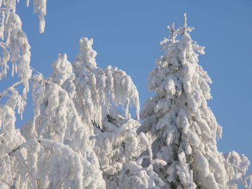 Crown Snow Load
