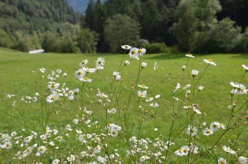 tyrol austria mountains