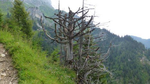 tyrol tannheimertal fir home's hut