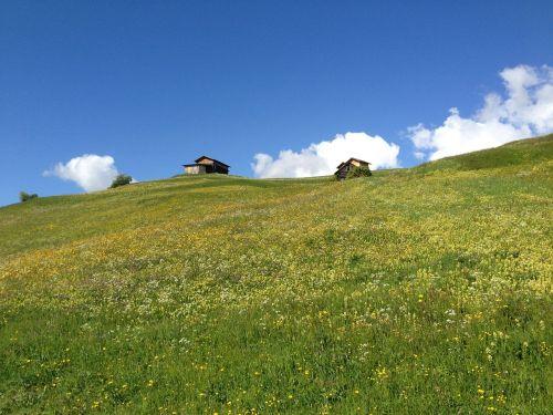 tyrol fiss wildflowers