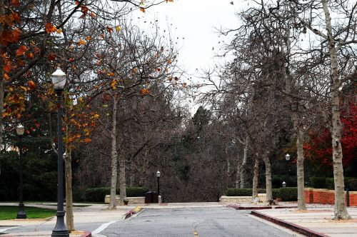 UCLA Bruin Walk In The Fall