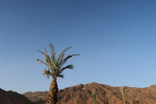 uhut  mountain  medina