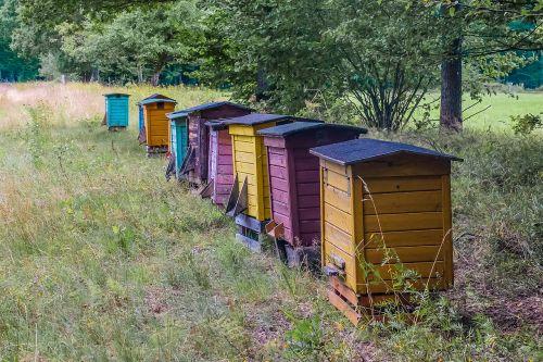hive beehive honey