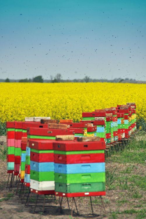 ule bees summer