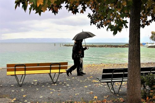 umbrella rain autumn