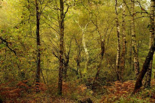 under wood fall september