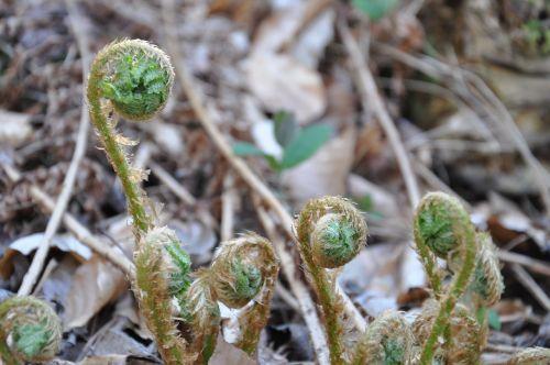 undergrowth ferns nature