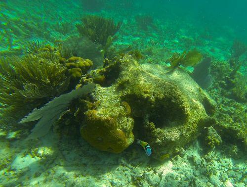 underwater coral fish