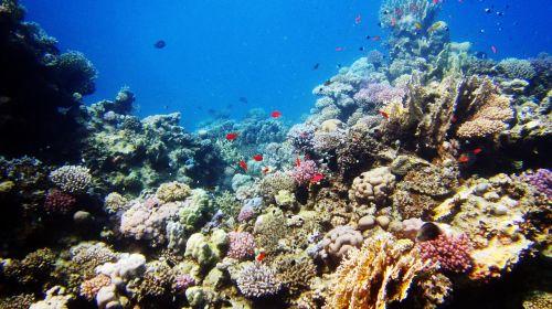 underwater sea diving