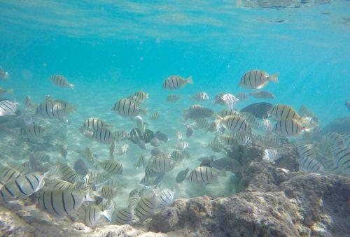 underwater fish hawaii snorkel