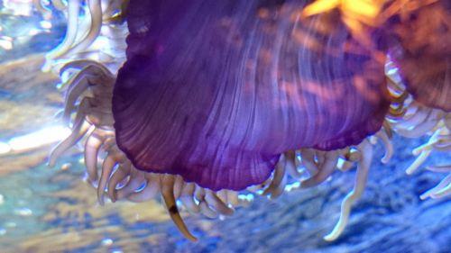 Underwater Hydrophyte