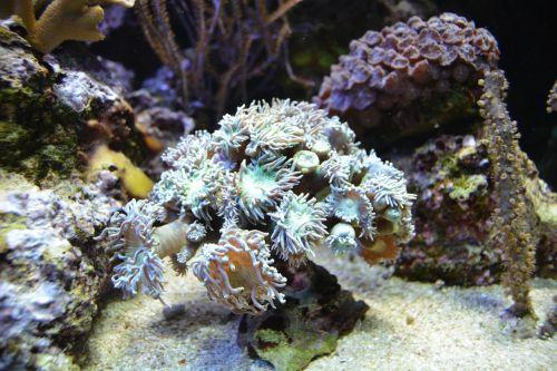underwater world water underwater