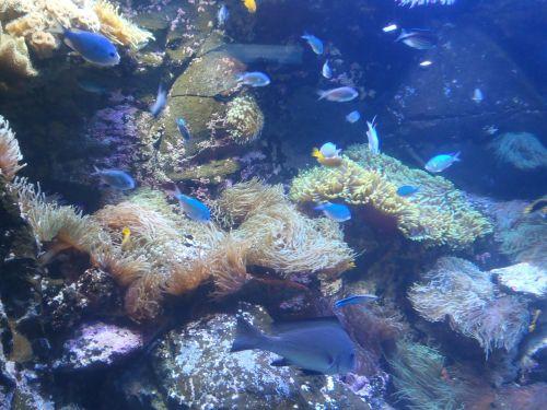 underwater world exotic fish underwater life