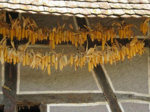 ungersheim ecomuseum truss corn harvest