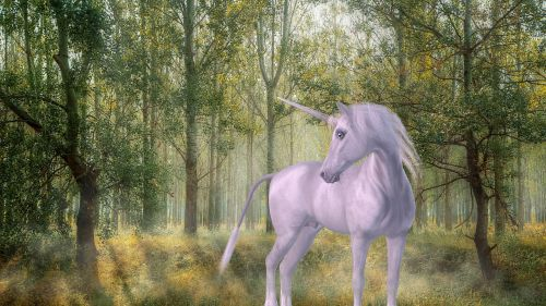 unicorn forest fairy tales