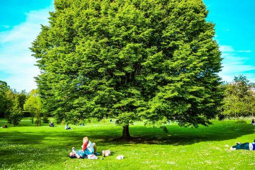 Jungtinė Karalystė,Londonas,parkas,st james parkas,mediena,dangus,pavasaris,Europa,kelionė,šventė,Anglija,medis